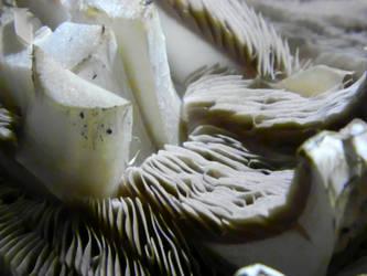 Mushroom by MarzEz