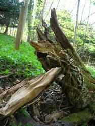 treebeast by photodash