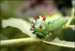 Cecropia moth larva - 2 by J-Y-M