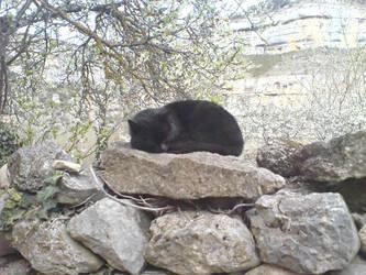 Gato mimiendo by Mikelats