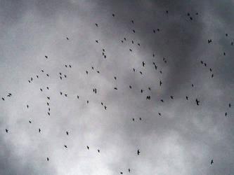 flying nomads by softhunterdevil