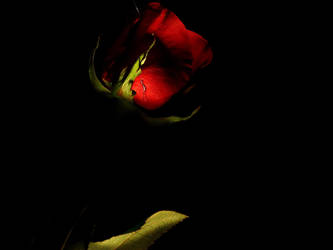 Dark Light by 466707062