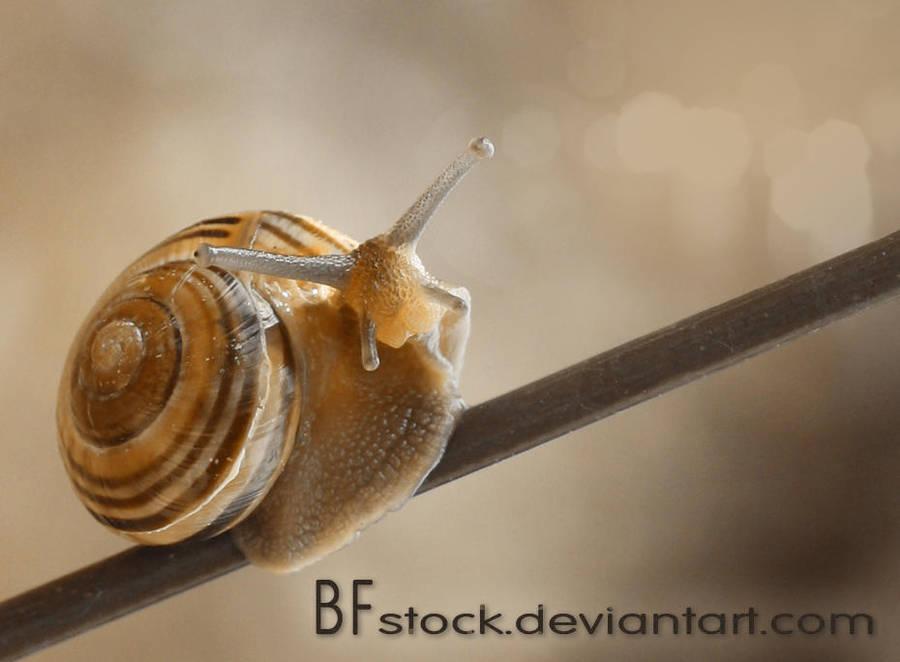 BFstock's Profile Picture