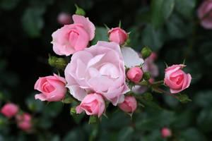 Flower Stock 95 by BFstock