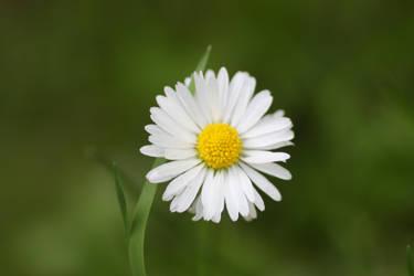 Flower Stock 97 by BFstock