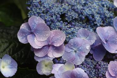 Flower Stock 99 by BFstock