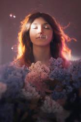 Lilac by Dferous
