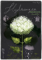 Botanica V: Hydrangea arborescens 'Annabelle' by Dferous