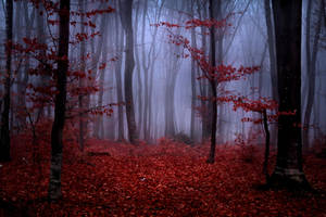 Foggy Misty Autumn Forest 2 by khoirulmahmudinstock