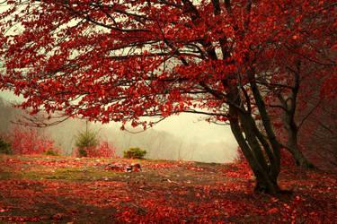 Foggy Misty Autumn Forest 3 by khoirulmahmudinstock