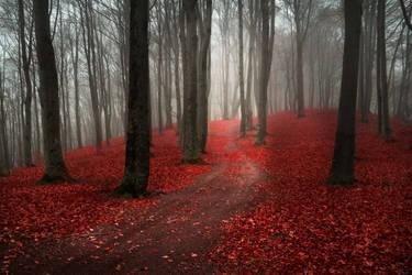 Foggy Misty Autumn Forest 5 by khoirulmahmudinstock