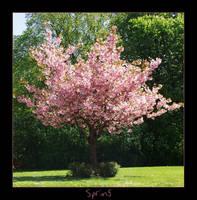 Spring by Nebolosa