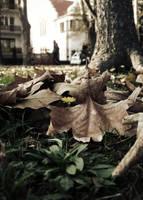 .Little Flower. by Loinaar