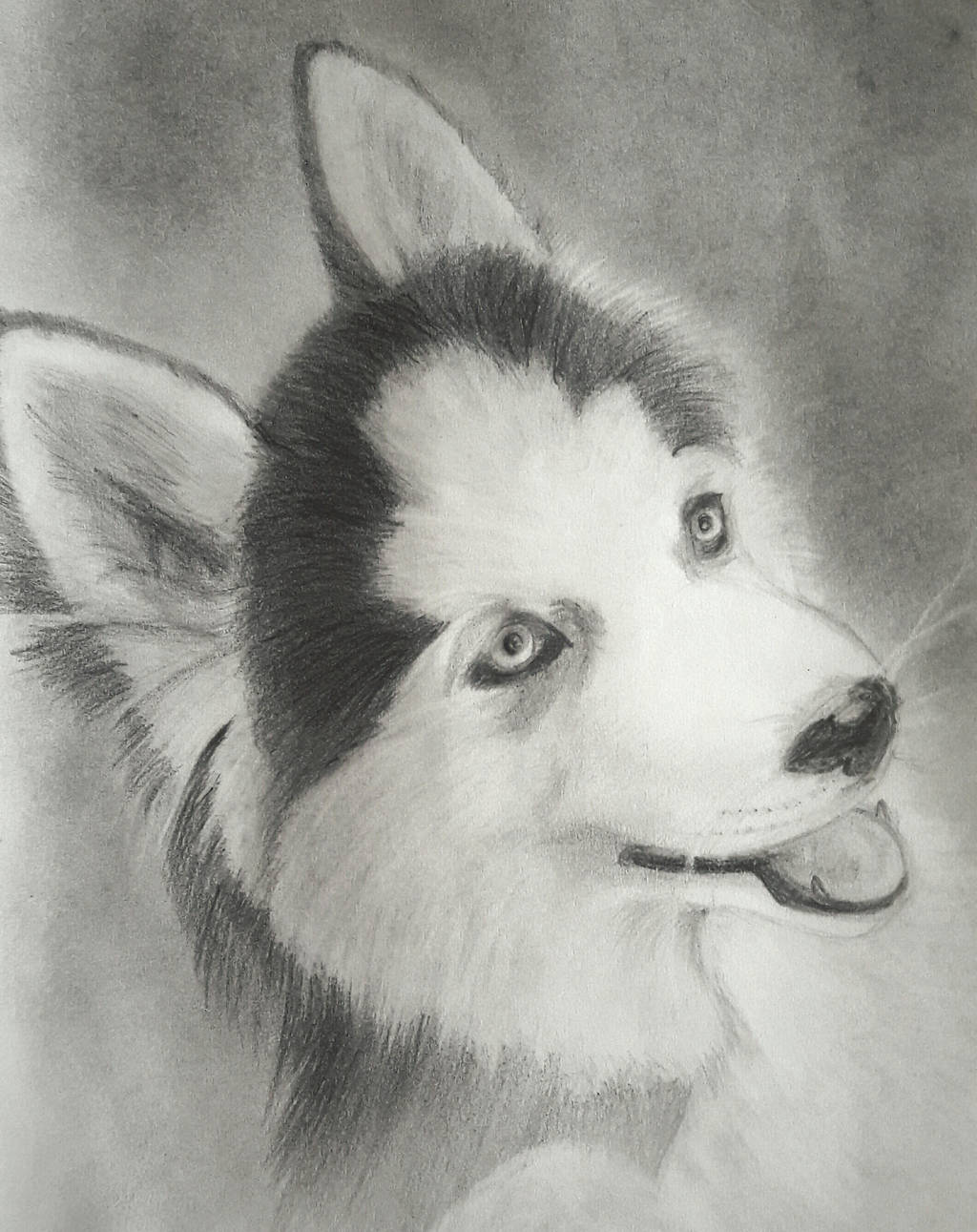 Siberian Husky Photo Sketch By Mixnmash On Deviantart