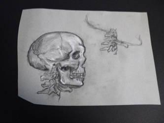 Skull in Profile by hEyJude4