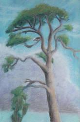 Tree With Osprey by hEyJude4