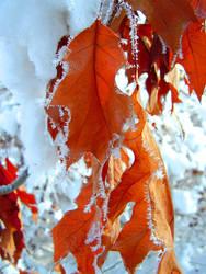 winter by Latimeria