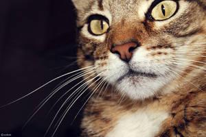 Cat Face by szndsgn