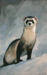 Snow Ferret by spoof-or-not-spoof
