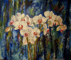 Orchids by Cllaud