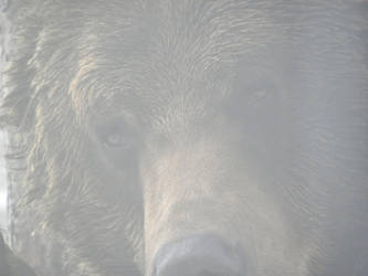 bear 1 by 1boredcanadian