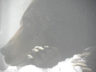 bear 2 by 1boredcanadian