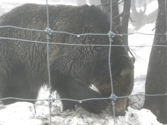 bear 3 by 1boredcanadian