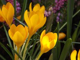 yellow like the sun by queenmoreta