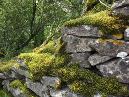 mossy wall by queenmoreta