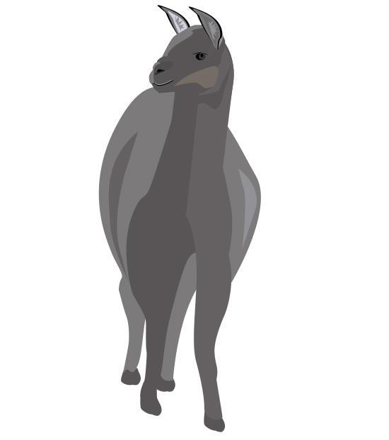 Llama by mapgie