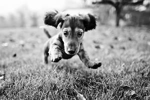 Puppy Dog! by xZaiko