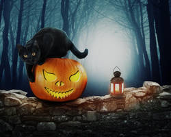 Pumpkin Cat Halloween by somnathphotography
