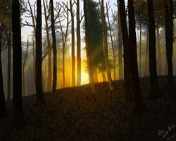 Forest Sunset by NikSebastian
