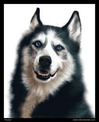 Portrait of a Husky by NikSebastian