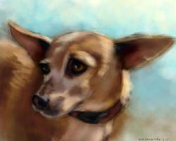 Pet Portrait by NikSebastian