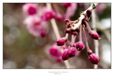 Awaiting the Bloom by SKY-ia