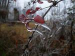 Frozen by BlazingFireBug
