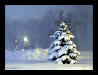 Pretty Little Tree at Night by Momma-Cat