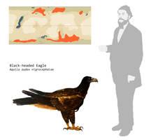 Black-headed Eagle by PLASTOSPLEEN