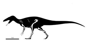 Rigorous Australovenator wintonensis Skeletal by PLASTOSPLEEN