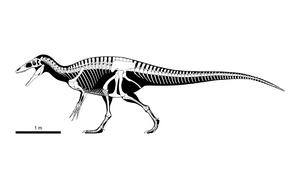 Australovenator wintonensis Skeletal mk 2 by PLASTOSPLEEN