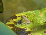 Leafy Boat Ride by Ryardn