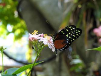 Sweet Floral Treat by Ryardn