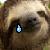 A single sloth tear