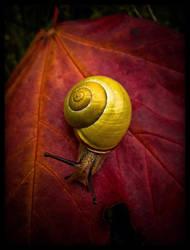 nine inch snail by baspunk