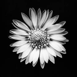 la fleur by baspunk