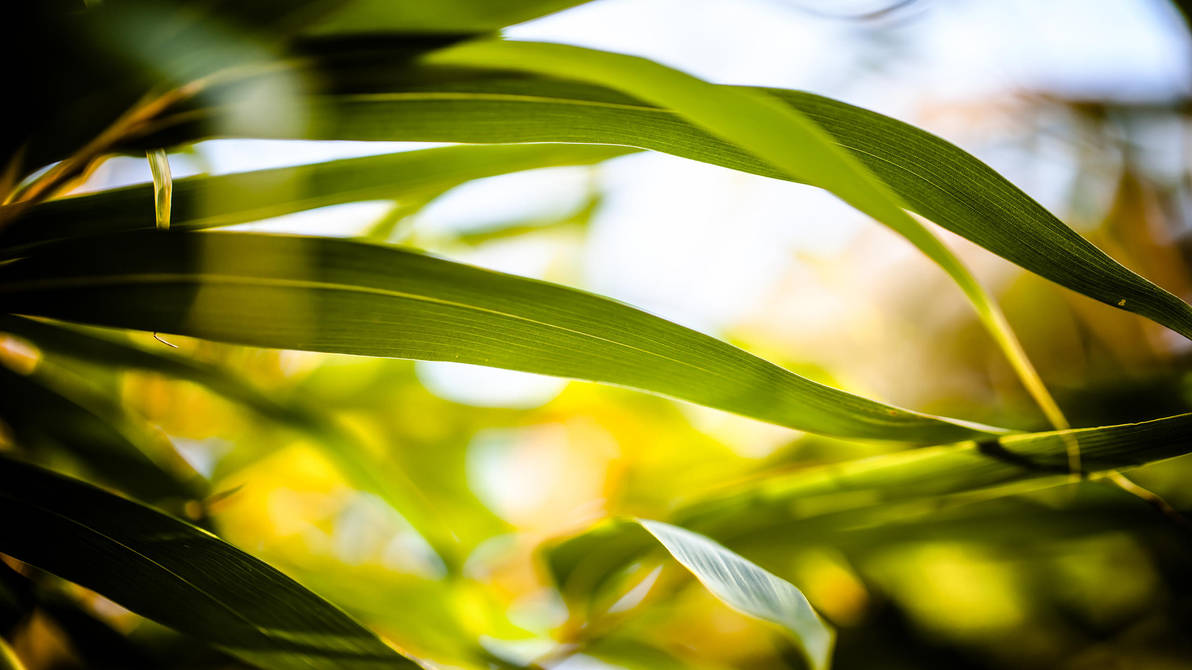 bamboo by baspunk