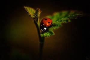 Ladybug by baspunk
