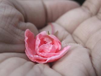 not a rose by Lazulyte