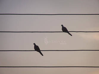 Songbirds by Lazulyte